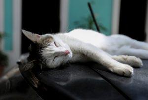 circulation and sleep